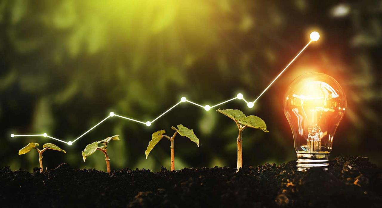 Opinión sobre la contabilidad de los contratos de energía renovable Palabra clave: energía. Imagen de unas plantas creciendo y al final una bombilla plasmando las energías renovables